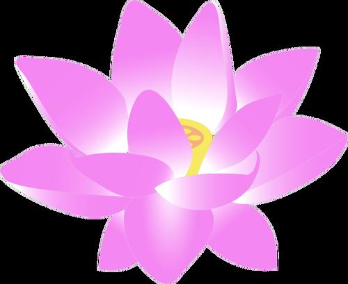 lotus_fleur